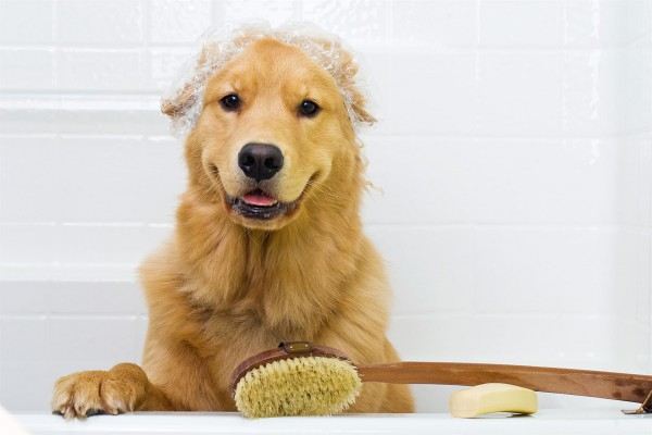 venice fl dog groomer picture gallery
