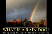What is a rain dog?