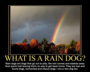 What is a rain dog? Rain dog pet grooming, Venice FL